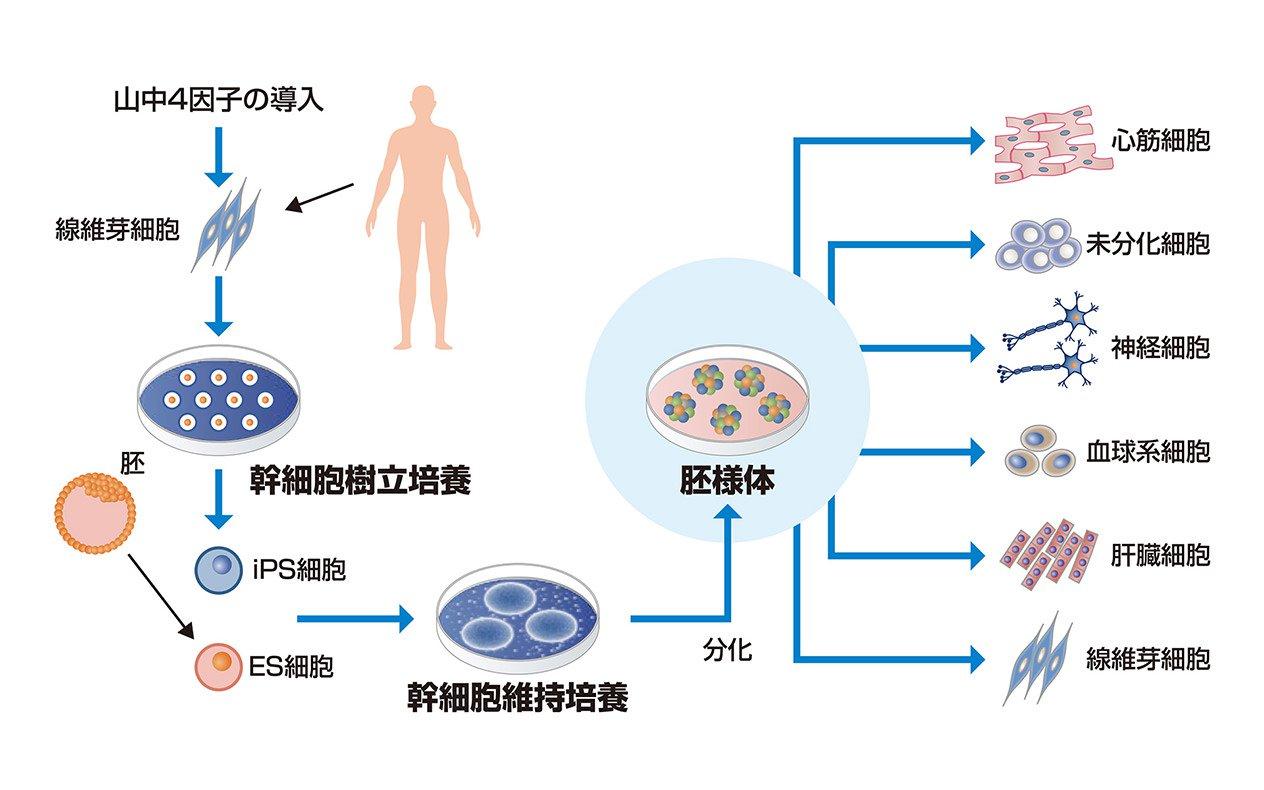 細胞品質評価   株式会社ニコン ヘルスケア事業部